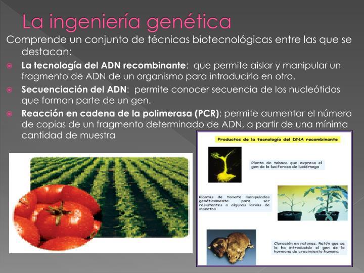 La ingeniería genética
