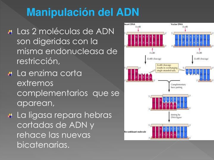 Manipulación del ADN