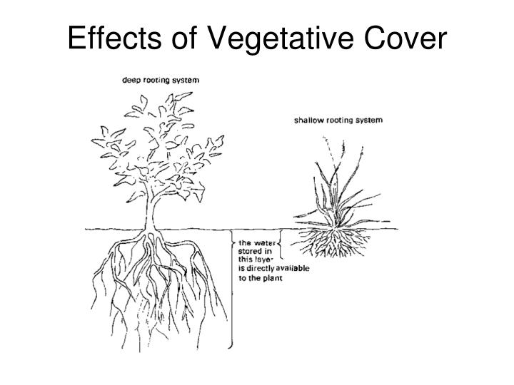 Effects of Vegetative Cover