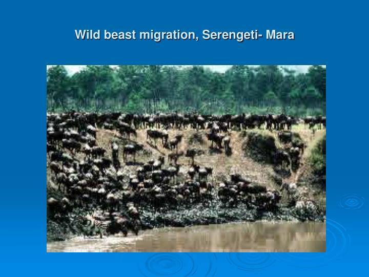 Wild beast migration, Serengeti- Mara