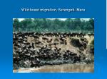wild beast migration serengeti mara