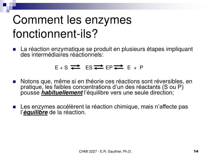 Comment les enzymes fonctionnent-ils?