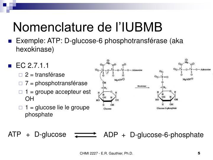 Exemple: ATP: D-glucose-6 phosphotransférase (aka hexokinase)