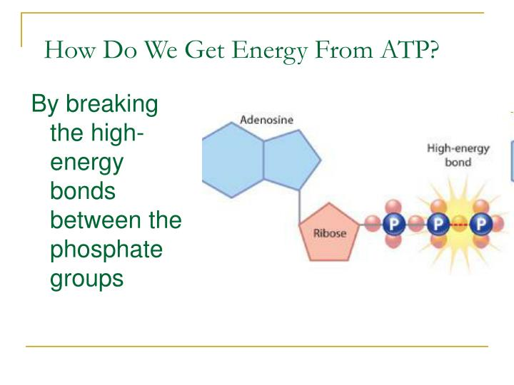 How Do We Get Energy From ATP?