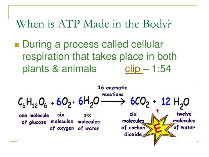 When is ATP Made in the Body?