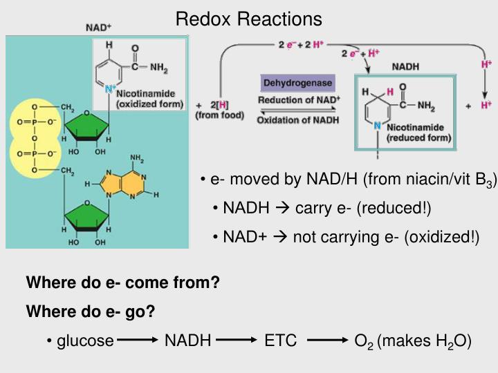 • glucose    NADH    ETC  O