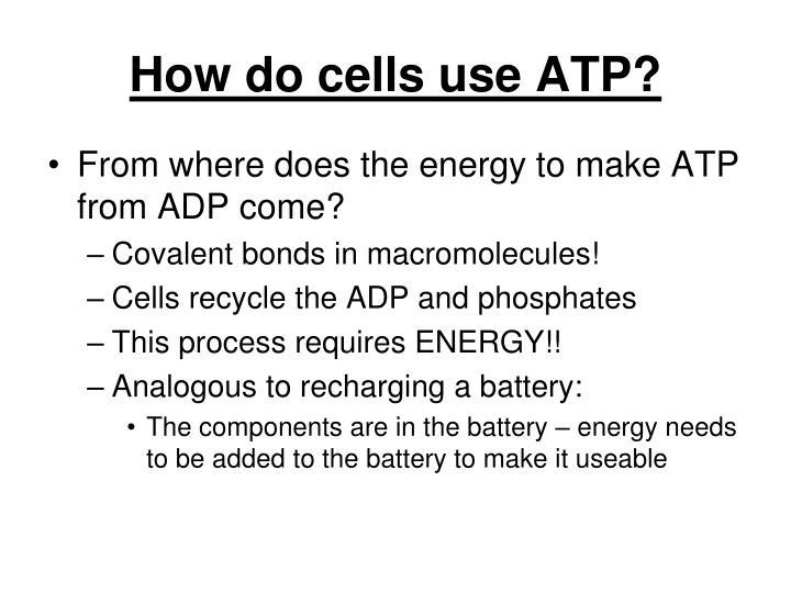 How do cells use ATP?