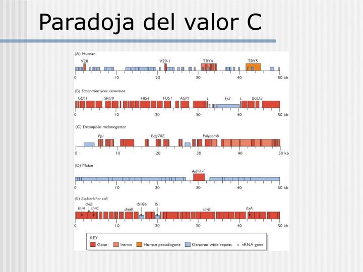 Paradoja del valor C