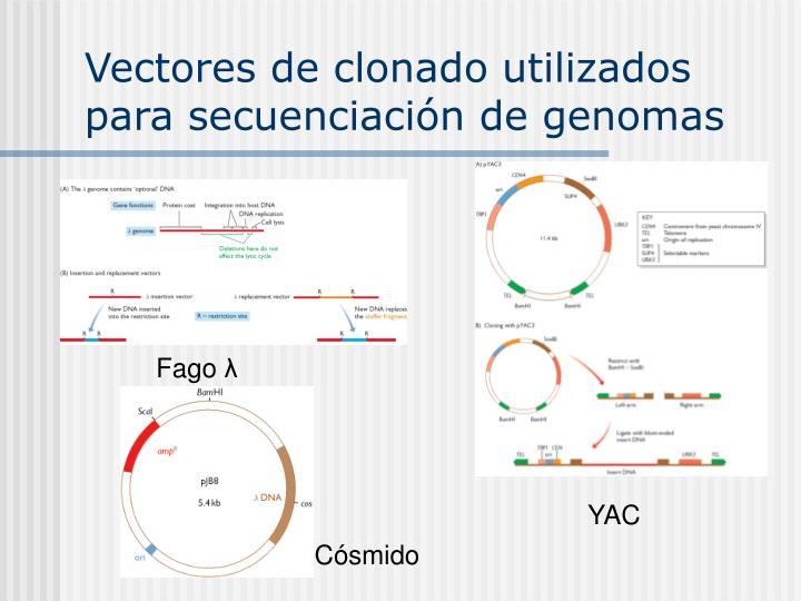 Vectores de clonado utilizados para secuenciación de genomas