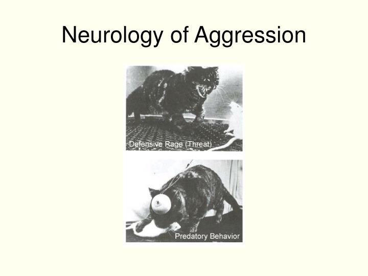 Neurology of Aggression