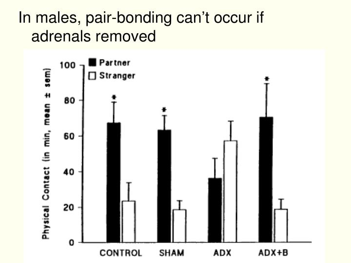 In males, pair-bonding can't occur if adrenals removed