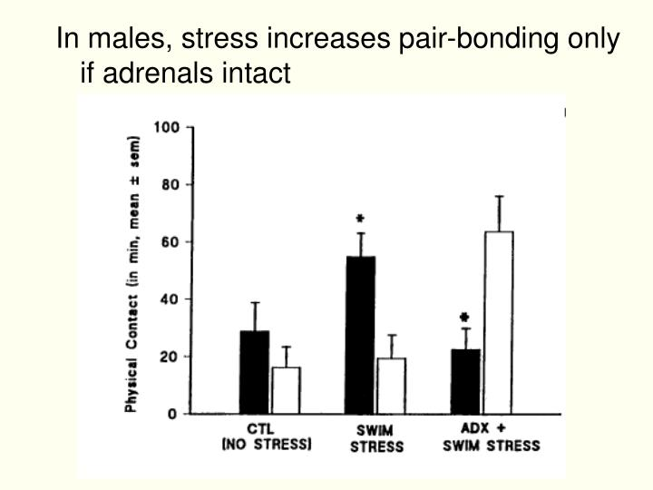 In males, stress increases pair-bonding only if adrenals intact