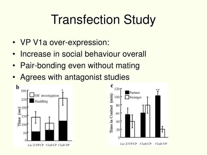 Transfection Study
