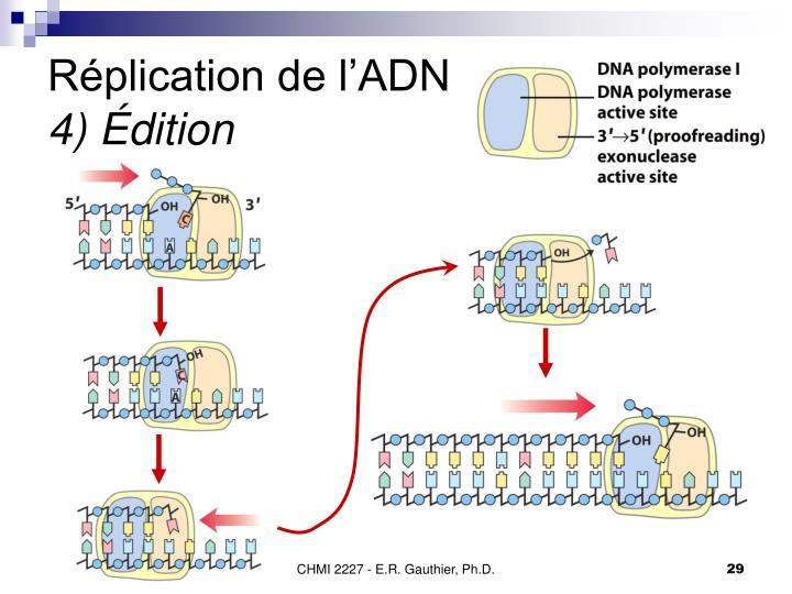 Réplication de l'ADN