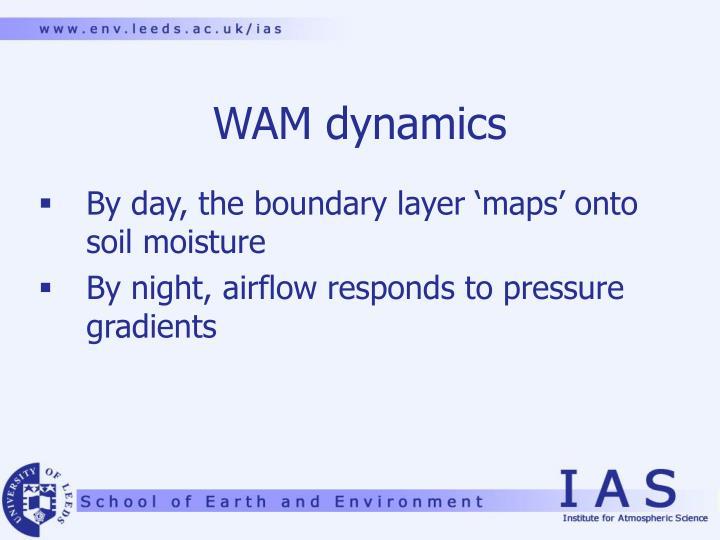 WAM dynamics