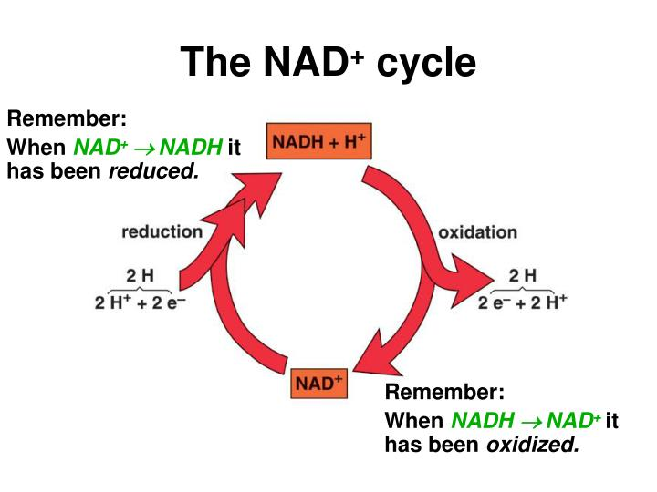 The NAD