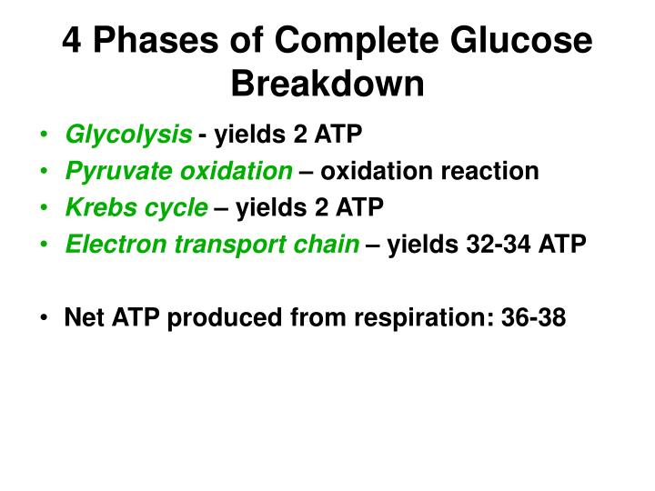 4 Phases of Complete Glucose Breakdown