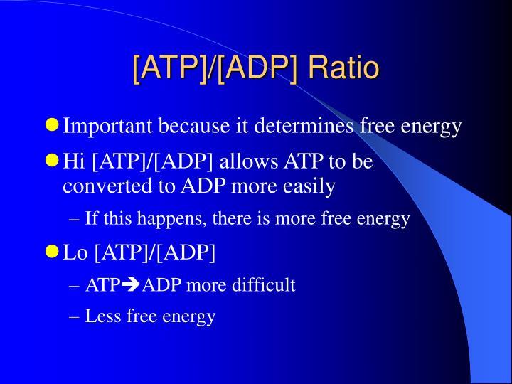 [ATP]/[ADP] Ratio