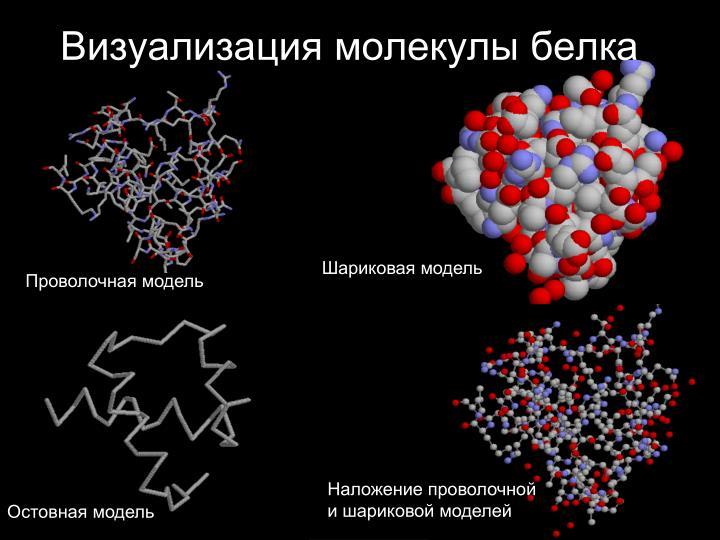 Визуализация молекулы белка