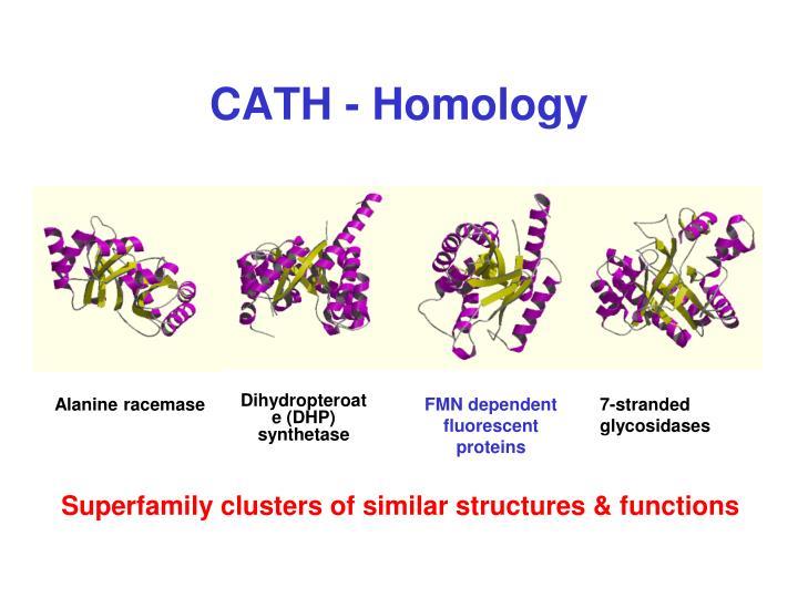 CATH - Homology