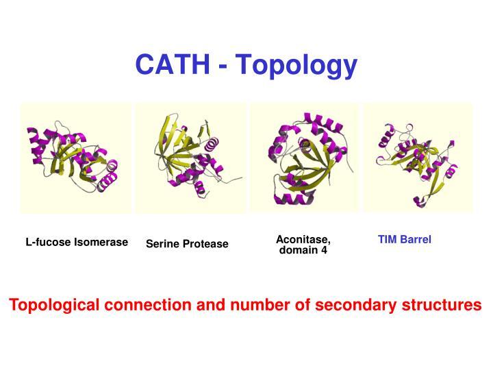 CATH - Topology