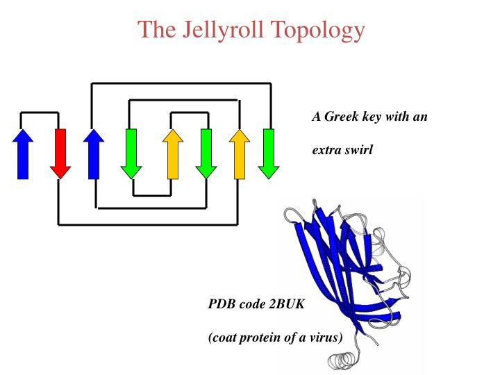 The Jellyroll Topology