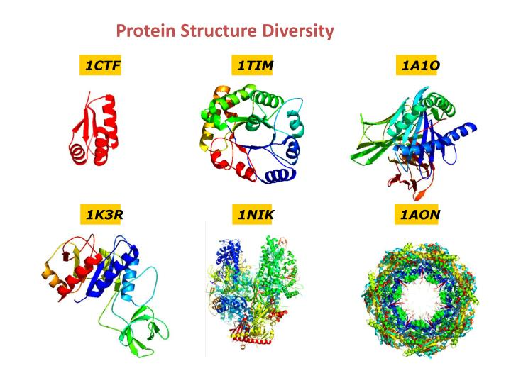 Protein Structure Diversity
