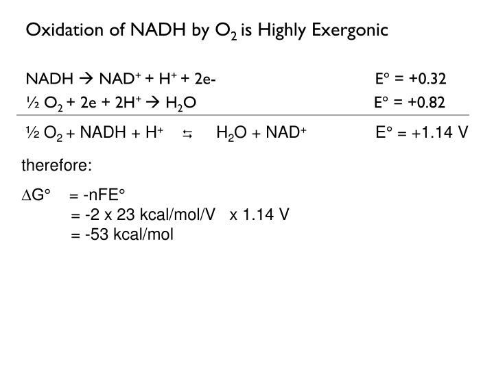 Oxidation of NADH by O