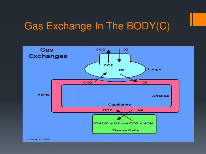 Gas Exchange In The BODY(C)