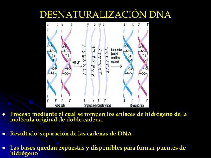 DESNATURALIZACIÓN DNA