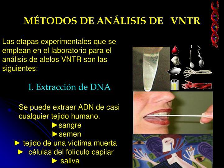 MÉTODOS DE ANÁLISIS DE   VNTR