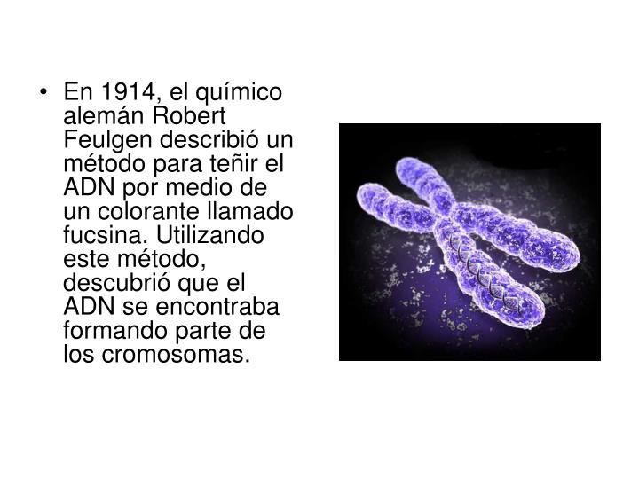 En 1914, el químico alemán Robert Feulgen describió un método para teñir el ADN por medio de un colorante llamado fucsina. Utilizando este método, descubrió que el ADN se encontraba formando parte de los cromosomas.
