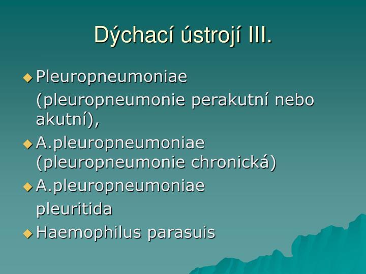 Dýchací ústrojí III.