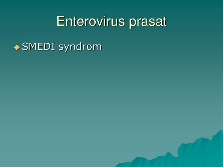 Enterovirus prasat