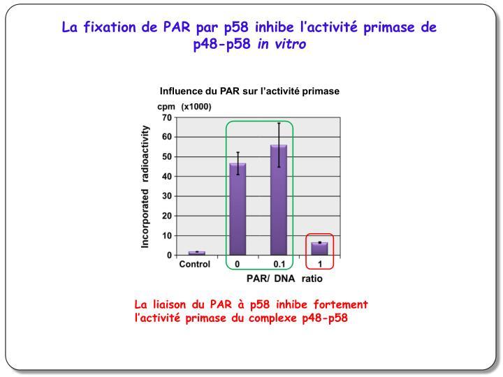La fixation de PAR par p58 inhibe l'activité primase de p48-p58