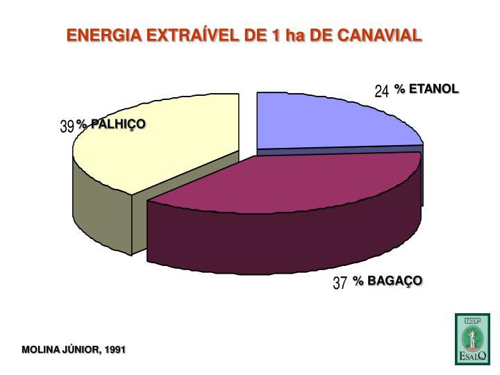 ENERGIA EXTRAÍVEL DE 1 ha DE CANAVIAL