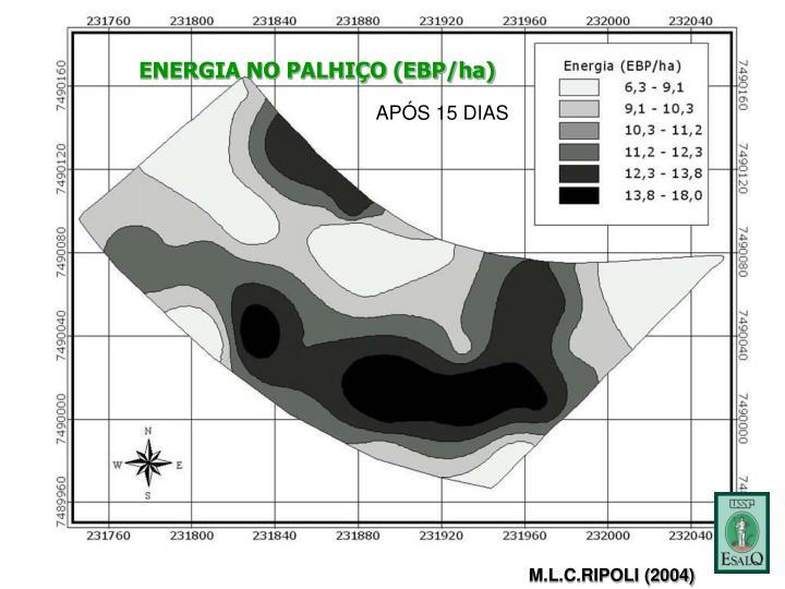ENERGIA NO PALHIÇO (EBP/ha)