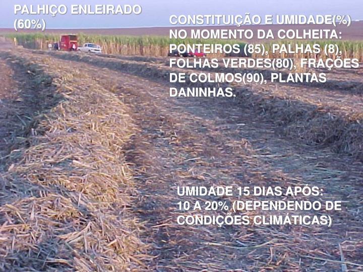 PALHIÇO ENLEIRADO