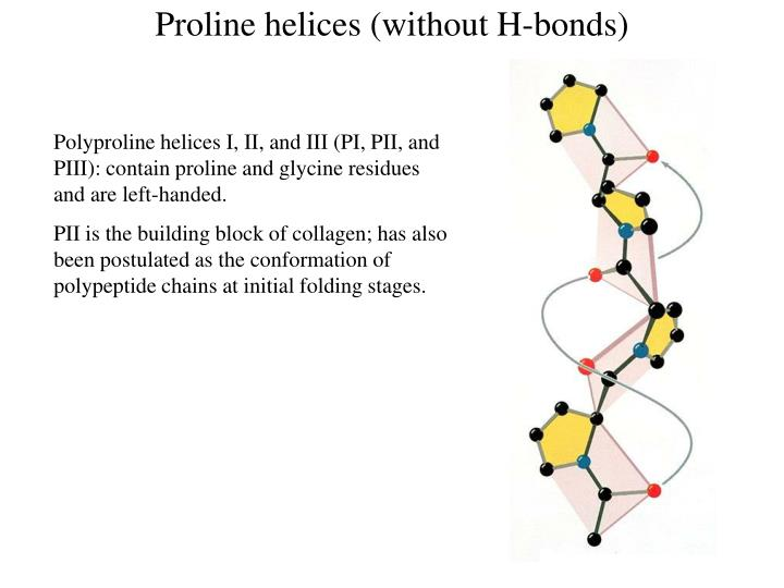 Proline helices (without H-bonds)