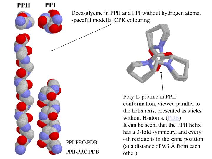 Deca-glycine in PPII and PPI without hydrogen atoms, spacefill modells, CPK colouring