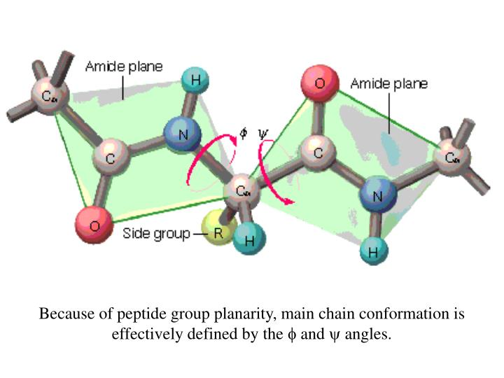 Because of peptide group planarity, main chain conformation is effectively defined by the