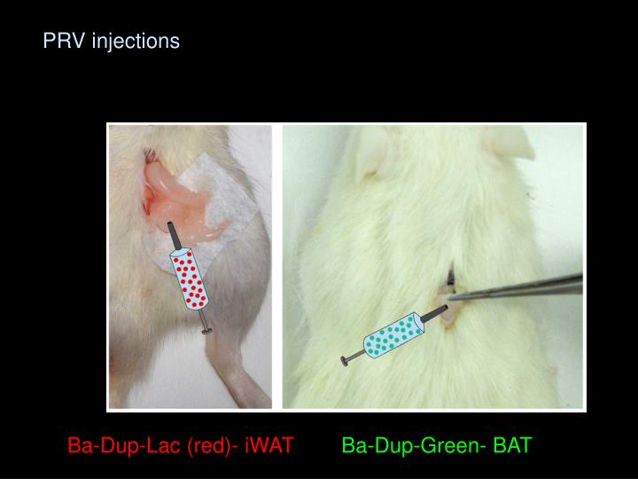 PRV injections