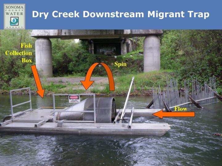 Dry Creek Downstream Migrant Trap