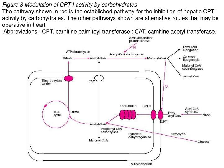 Figure 3 Modulation of CPT I activity by carbohydrates