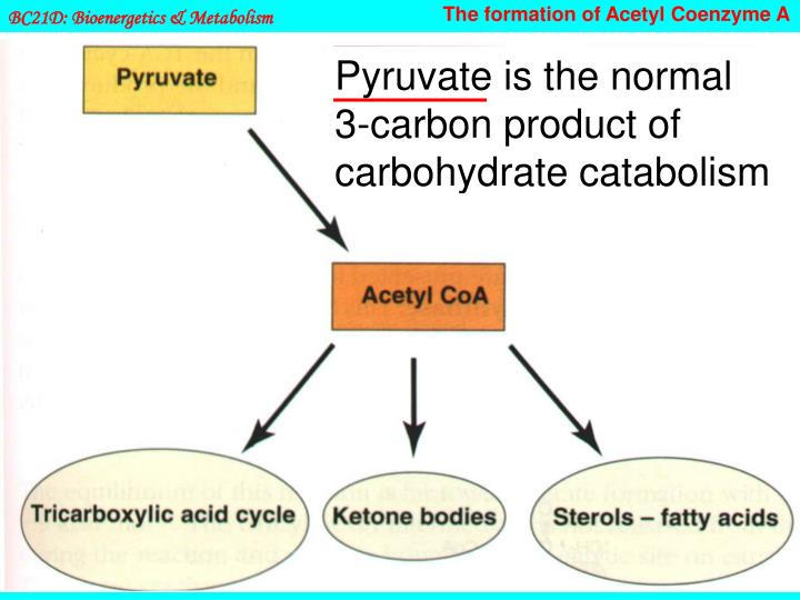 The formation of Acetyl Coenzyme A
