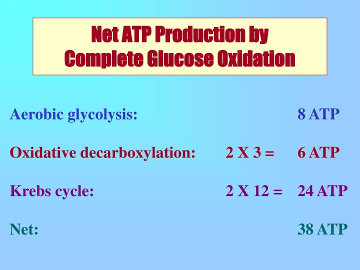 Net ATP Production by