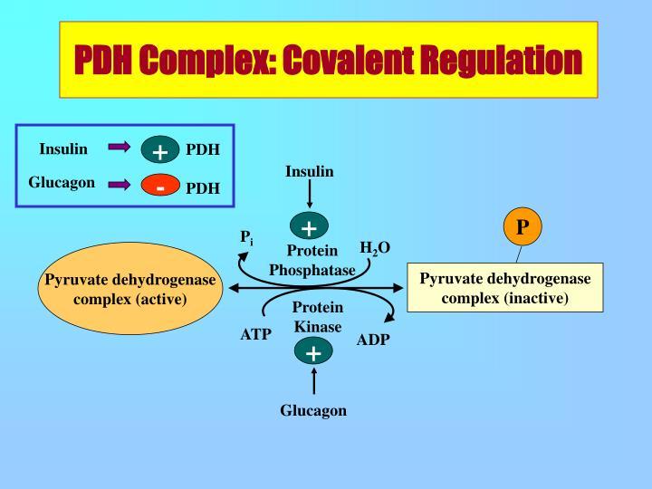 PDH Complex: Covalent Regulation