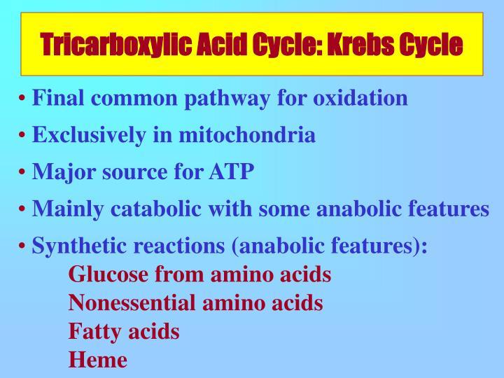 Tricarboxylic Acid Cycle: Krebs Cycle