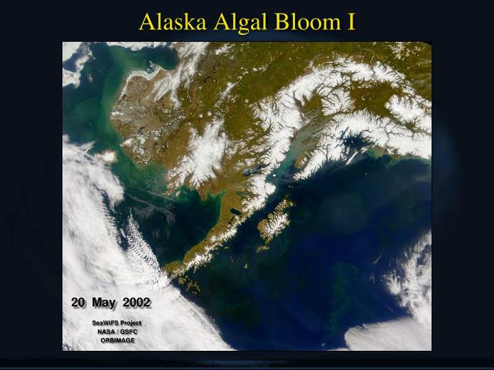 Alaska Algal Bloom I