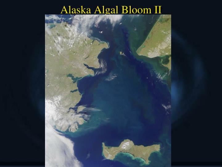 Alaska Algal Bloom II